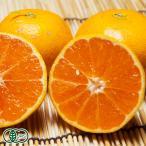 有機 温州みかん(セール) A品5kg(佐賀県 佐藤農場)無農薬柑橘・送料無料・産地直送