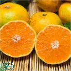 おっきな温州みかん 5kg(L〜3Lサイズ混合)(佐賀県 佐藤農場)無農薬柑橘・送料無料・産地直送