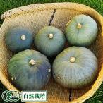 東京南瓜 約6kg 農薬不使用(無農薬) オーガニック 自然栽培 (青森県 SKOS合同会社) かぼちゃ