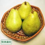 【B品】バラード 6kg 特別栽培 (長野県 さんさんファーム) 産地直送
