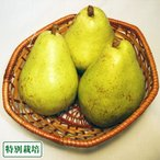【B品】バラード 3kg 特別栽培 (長野県 さんさんファーム) 産地直送