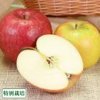 りんご 青森りんご2色セット A品5kg箱 特別栽培 (青森県 田村りんご農園) 産地直送