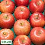 ふじ 家庭用 10kg箱(青森県 田村りんご農園) 特別栽培 減農薬 りんご 送料無料 産地直送