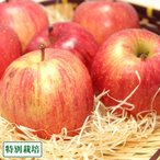 【訳あり】ふじ 3kg箱 特別栽培 (青森県 田村りんご農園) 産地直送