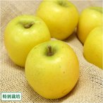 シナノゴールド A品 5kg箱 特別栽培 (青森県 田村りんご農園) 産地直送