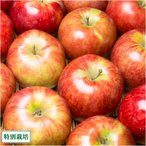 早生りんご(赤) 家庭用10kg箱 特別栽培 (青森県 田村りんご農園) 産地直送