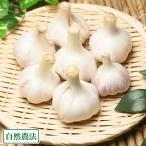 バラ詰め乾燥にんにく M〜Lサイズ 10kg(福岡県 たなかふぁーむ)無農薬野菜・送料無料・産地直送