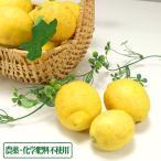 【無選別】広島県産(とびしま)レモン 10kg 無・無 (広島県 とびしま農園) 産地直送