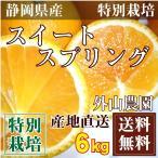 スイートスプリング サイズ混合6kg(静岡県三ヶ日町 外山農園)特別栽培 低農薬柑橘・減農薬・送料無料・産地直送・お徳用・規格外