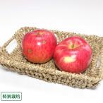 早生りんご(赤) 訳あり5kg箱 特別栽培 (青森県 田村りんご農園) 産地直送