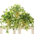 消臭 脱臭 空気清浄 光触媒観葉植物 フェイクグリーン おしゃれ インテリア「ポトス、アイビー、プミラ 3点セ