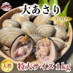 活大あさり(大アサリ)特大サイズ 1kg ひと口では食べられない大あさり 【愛知県産】