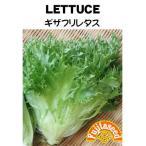 野菜 タネ 種 ギザフリレタス 藤田種子