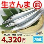 秋刀魚 特大10尾 気仙沼 サンマ