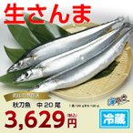 秋刀魚 中20尾 気仙沼 サンマ