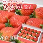 いちご イチゴ 苺 果物 ギフト 旬 フルーツ ひな苺 苺まもーるパック 1パック
