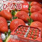 いちご イチゴ 苺 果物 ギフト 旬 フルーツ ひな苺 デラックス