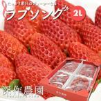 いちご イチゴ 苺 果物 ギフト 旬 フルーツ ラブソング 2Lサイズ×4パック