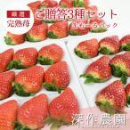 いちご イチゴ 苺 果物 ギフト 旬 フルーツ 贈答用いちご 苺まもーるパック3種セット