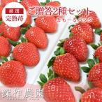 いちご イチゴ 苺 果物 ギフト 旬 フルーツ 苺まも〜るパック2種セット