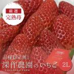 いちご イチゴ 苺 果物 ギフト 旬 フルーツ 品種指定なし 2Lサイズ×4パック