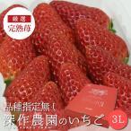 いちご イチゴ 苺 果物 ギフト 旬 フルーツ 品種指定なし プレミアムパック 3Lサイズ×4パック