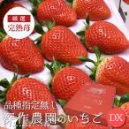 いちご イチゴ 苺 果物 ギフト 旬 フルーツ 品種指定なし デラックス