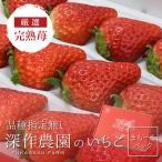 いちご イチゴ 苺 果物 ギフト 旬 フルーツ 品種指定なし  苺まもーるパック 1パック
