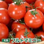 トマト プチトマト ミニトマト フルーツトマト 深作農園 フルトマミニー 1.5kg