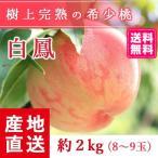 【送料無料 8月上旬発送予約注文】福島県産の桃 もぎたて完熟白鳳 約2kg(8〜9玉) ギフト・贈答用に 阿部農縁 もも モモ