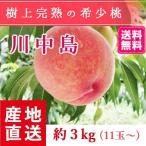 【送料無料 8月下旬〜9月中旬発送予約注文】福島県産の桃 もぎたて完熟川中島 約3kg(11玉〜) ギフト・贈答用に 阿部農縁 もも モモ