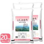 コシヒカリ  20kg お米 白米 福井県大野産 5kg×4袋 令和2年産