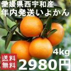 柑橘 - 年内発送いよかん 4kg 良品 愛媛県西宇和産 送料無料