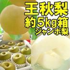 福島県 萱場産 王秋 梨 約5kg箱  (7〜12玉)