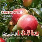 福島県産 サンふじ りんご 約13.5kg箱(9kg箱+4.5kg箱) 36〜75玉入 訳あり ご家庭用 リンゴ 大きさ 不揃い 訳ありリンゴ 蜜入 お歳暮 キズあり