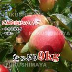 福島県産 サンふじ りんご 約9kg箱 24〜50玉入 訳あり ご家庭用 リンゴ 大きさ 不揃い 傷 訳ありリンゴ 蜜入 お得 お歳暮 傷あり キズあり