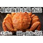 ふるさと納税 根室海鮮市場<直送>ボイル毛がに600〜750g×2尾 C-28005 北海道根室市