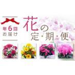 ふるさと納税 (341)季節のお花フラワーギフト定期便1年間!2ヶ月に1度お花が届きます。 茨城県境町