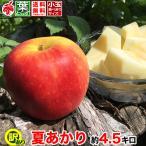 家庭用 夏あかり 約5キロ 葉とらず 信州りんご およそ12〜20玉 希少品種 等級B 5kg 送料無料 数量限定 ご予約受付中