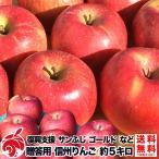ご予約受付中 復興支援 贈答用 葉とらず りんご 約5キロ およそ12〜20玉 5kg 等級A ギフト 減農薬 長野県産 産地直送