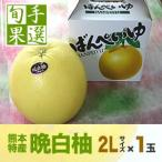熊本八代産の晩白柚(バンペイユ・ばんぺいゆ)2Lサイズ・1玉入り
