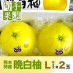 熊本八代産の晩白柚(バンペイユ・ばんぺいゆ)Lサイズ・2玉入り