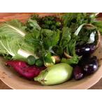 無農薬野菜セットB