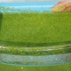 (水草) ミジンコ浮草 100g / ミジンコ藻 水草 浮草 鉢 メダカ
