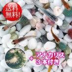 (メダカ) めだか おまかせ風流ミックス 未選別 稚魚(SS〜Sサイズ) 20匹セット + アナカリス 3本付き / ミックス お買い得 淡水魚 メダカ 金魚藻 水草