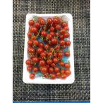 マイクロトマト 1pc  国産