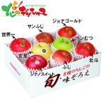 青森県産 りんご 8種のりんごの味ぞろえ お歳暮 冬ギフト 年越し お正月 年末年始 ギフト 贈り物 果物 フルーツ 詰め合わせ 北海道 お取り寄せ
