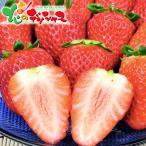 いちご 毬姫様(400g) お歳暮 冬ギフト 年越し お正月 年末年始 ギフト 贈り物 プレゼント 果物 フルーツ 詰め合わせ 北海道 お取り寄せ