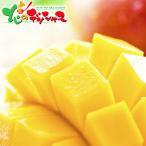 【お中元ギフト】太陽のタマゴ 御中元 暑中見舞い 残暑見舞い ギフト 贈り物 贈答 高級 果物 フルーツ マンゴー 人気 北海道 お取り寄せグルメ