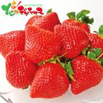 紅白いちご(計200g) 2020 お歳暮 ギフト 贈り物 贈答 お礼 お返し いちご イチゴ 果物 フルーツ グルメ 送料無料 お取り寄せグルメ